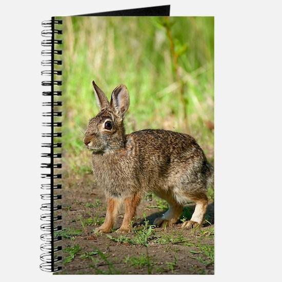 Desert Cottontail Blank Journal