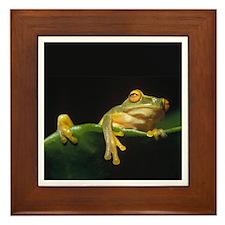 Frog Time Framed Tile