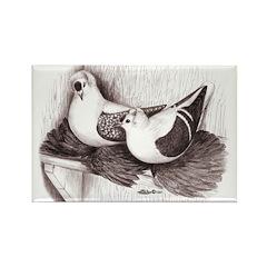 Saxon Fairy Swallow Pigeons Rectangle Magnet (10 p