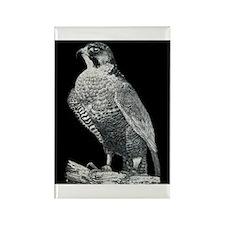 Peregrine Falcon Rectangle Magnet