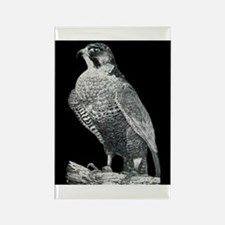 Peregrine Falcon Rectangle Magnet