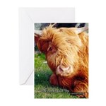 Here's Looking At You Greeting Cards (Pk of 20)