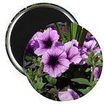 "Purple Flowers 2.25"" Magnet (10 pack)"