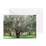 Spring Olive Tree Greeting Cards (Pack of 6)