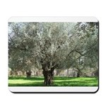 Olive trees in bloom Mousepad