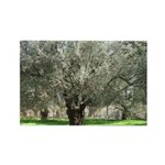 Olive trees in bloom Rectangle Magnet