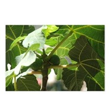 Fig Tree Postcards (Package of 8)
