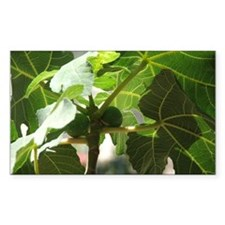 Fig Tree Rectangle Decal