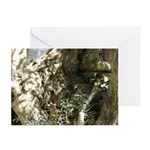Olive gnarl Greeting Cards (Pk of 10)