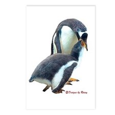 Gentoo Penguin feeding Postcards (Package of 8)