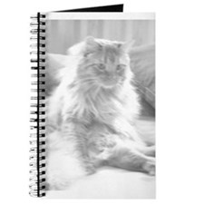 Orange Tabby Kitten Journal