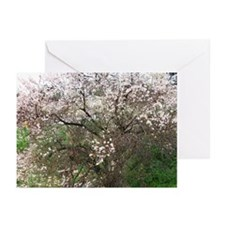 Almond Blossom  Greeting Cards (Pk of 10)
