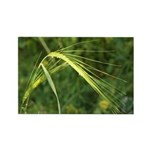 Spring Wheat Photo Rectangle Magnet