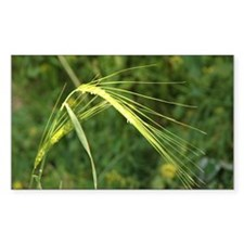 Spring Wheat Photo Rectangle Decal