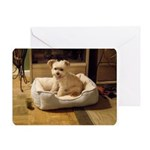 Sticky's New Bed - All-Occasion Greeting Cards