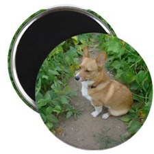 "Welsh Corgi ""In the garden""Magnet"