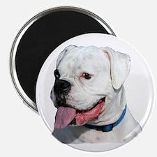 White Boxer Dog Magnet
