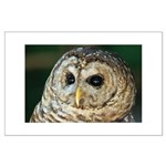 Owl Large Poster