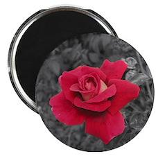 Black White Red Rose 2.25