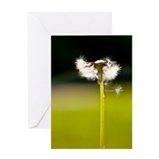 Tinker Park Dandelion Greeting Card