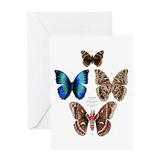 Butterflies and Moths Greeting Card