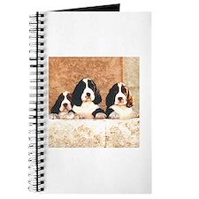 English Springer Pups 2 Journal