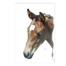 Cute American quarter horse Postcards (Package of 8)