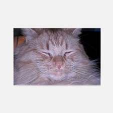 Orange Tabby Sour Puss Rectangle Magnet