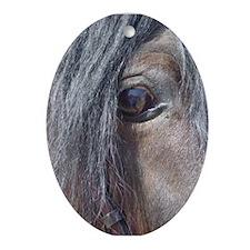 Morgan eye Oval Ornament