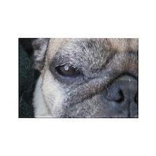pug eye Magnet