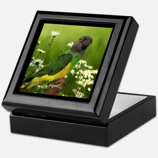 Senegal Parrot Keepsake Box