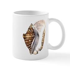 Strombus latissimus - left-handed cup