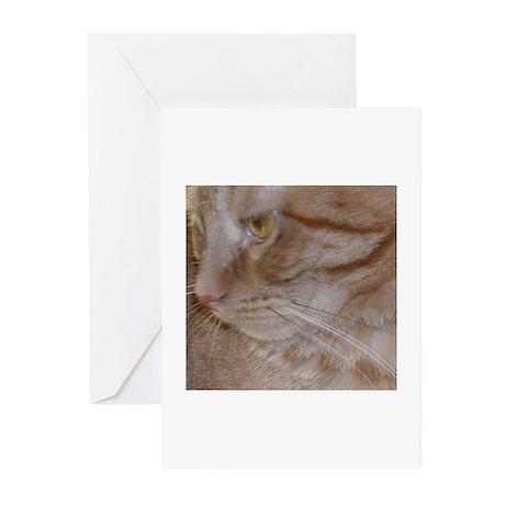 Orange Tabby Cat Greeting Cards (Pk of 20)