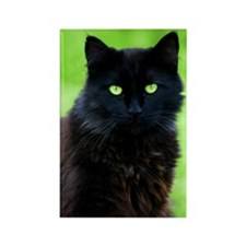 Beautiful Black Cat Rectangle Magnet (100 pack)
