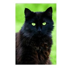 Beautiful Black Cat Postcards (Package of 8)