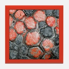 Red-footed Tortoise (w/border) Tile Coaster
