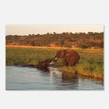 Unique Botswana Postcards (Package of 8)