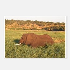 Funny Botswana Postcards (Package of 8)