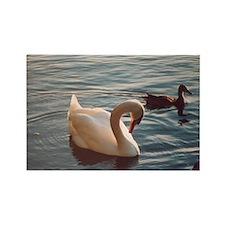 Cute Mute swan Rectangle Magnet