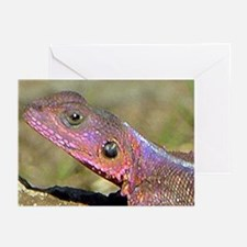 Agama Lizard Greeting Cards (Pk of 10)