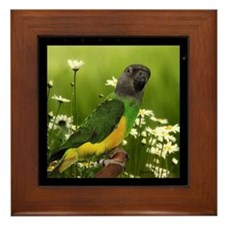 Senegal Parrot Framed Tile