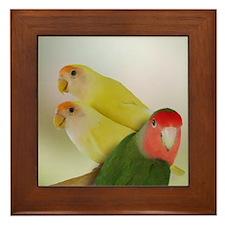 Lovebird Trio Framed Tile