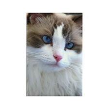 Ragdoll Cat Rectangle Magnet