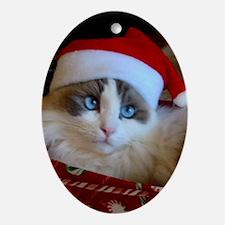 Ragdoll Cat Christmas Oval Ornament