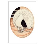 70s Indian Fantail Pigeon Large Poster