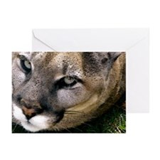 Panther Greeting Cards (Pack of 6)