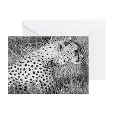 Cheetah, Kenya B&W Greeting Cards (Pack of 6)