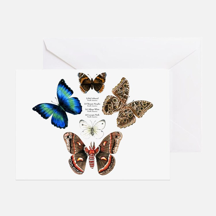 Butterfly and Moth Sampler Greeting Card