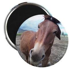 Josie, the mule Magnet
