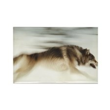 """Running Wolf"" Rectangle Magnet"